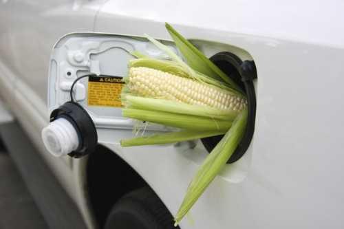 сырье для биодизеля